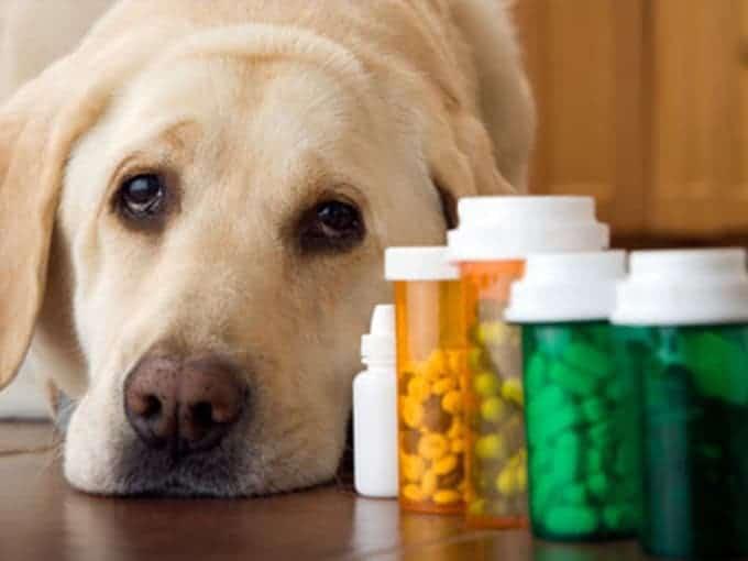 pet medication