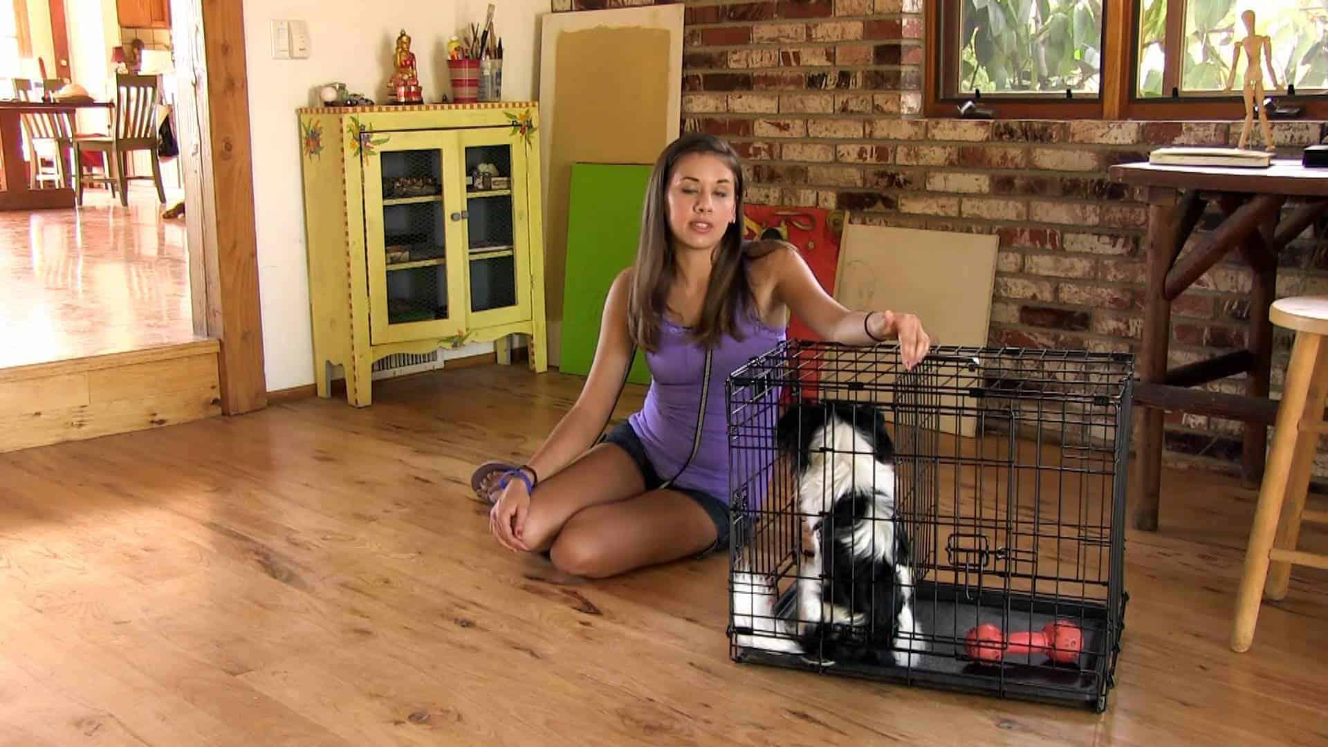 train your pet ferret