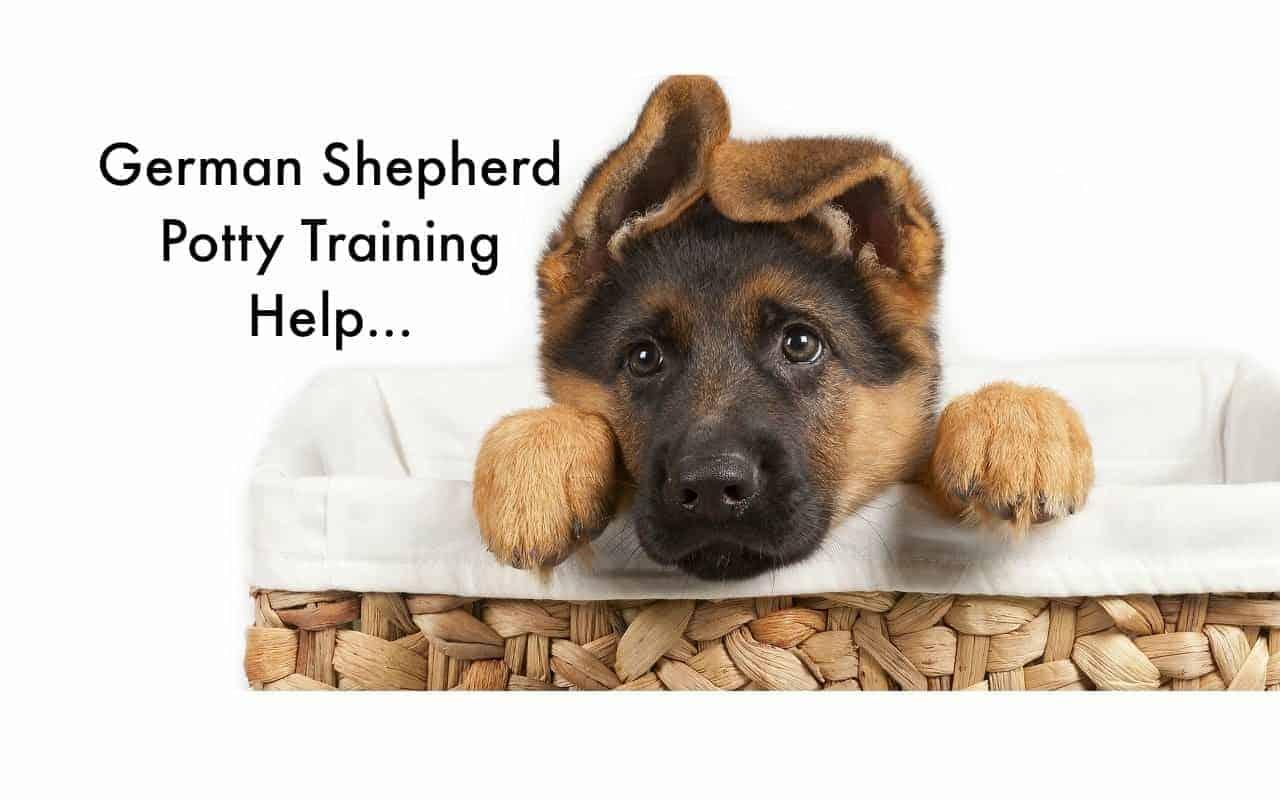 Potty Training Your German Shepherd Puppy Wwwcleverpuppytrainingcom