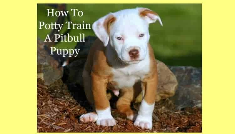 How To Potty Train A Pitbull Puppy