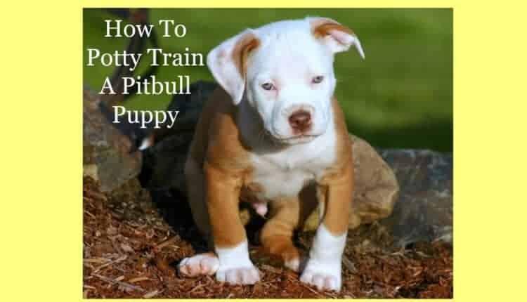 How To Potty Train A Pitbull Puppy