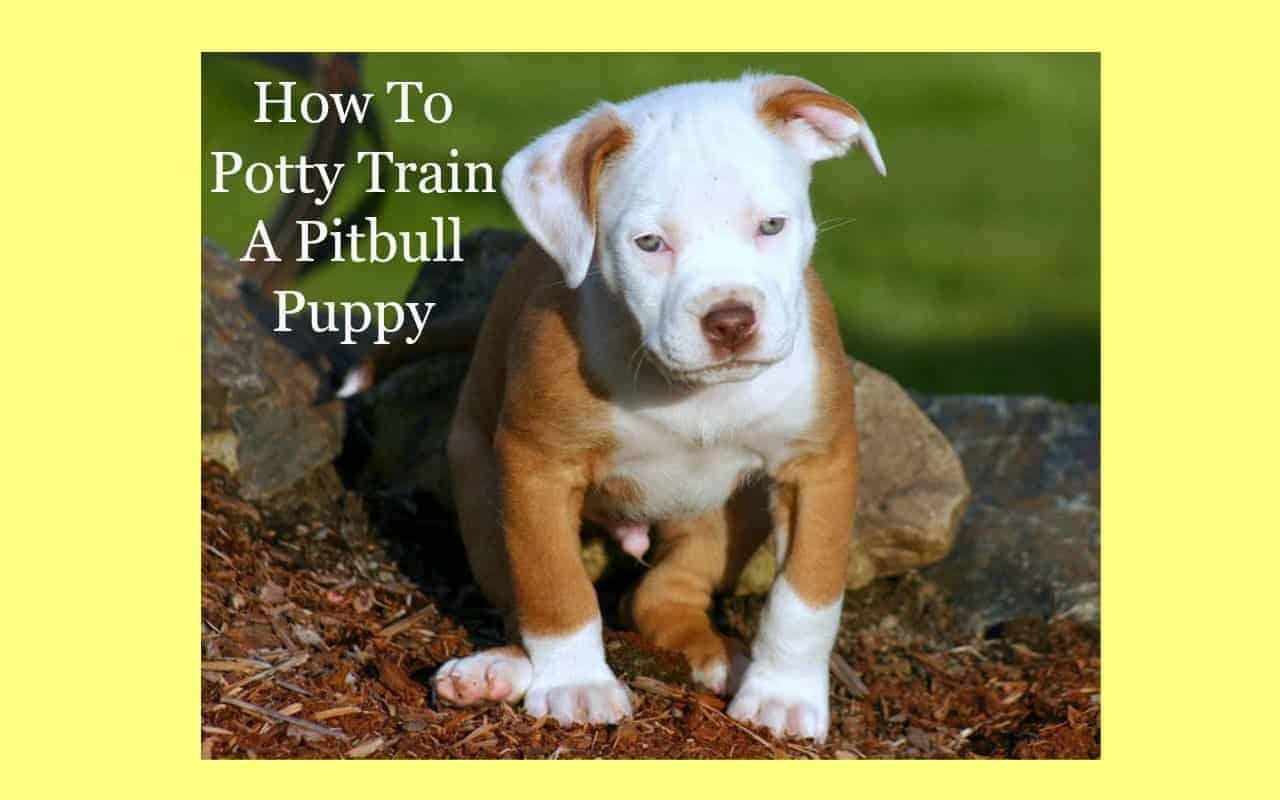 How To Train Your Dog On The Clever Pet