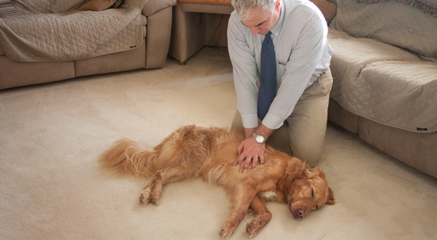 CPR for Dog: A Complete Guide to Saving Your Dog's Life