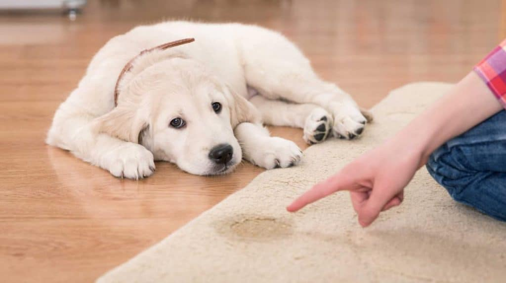 how to potty training your puppy