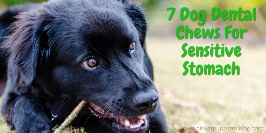 7 Dog Dental Chews For Sensitive Stomach - Safe & Healthy Teeth