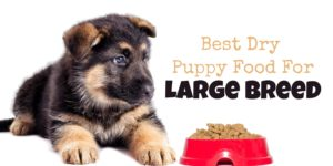 5 Best Dog Toys for Separation Anxiety