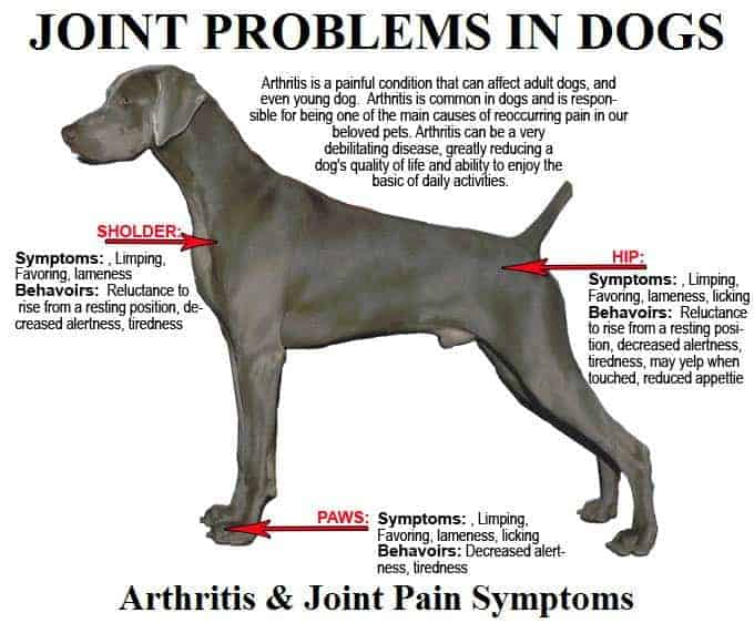 joint problem in dogs