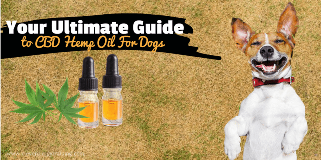 cbd-hemp-oil-for-dogs