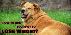 pet lose weight