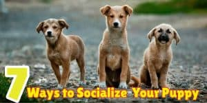 socialize-your-puppy