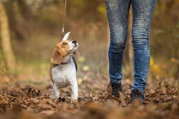 puppy-on-leash