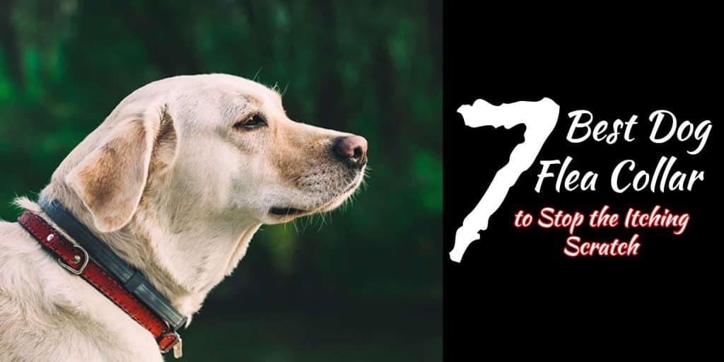 best dog flea collar