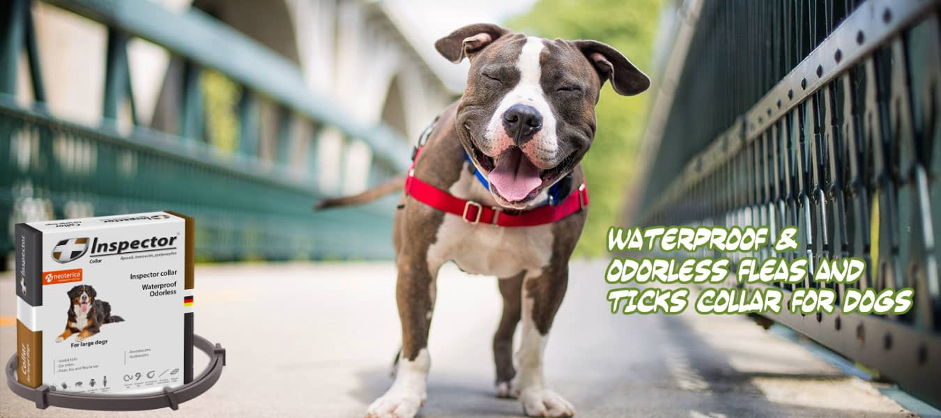 worm collar for dogs