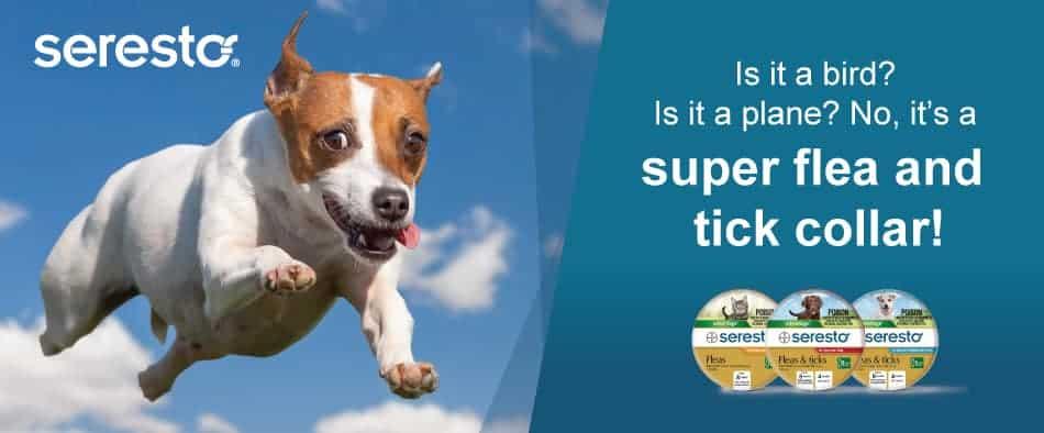 seresto-fleas-and-ticks-collar-for-small-dogs